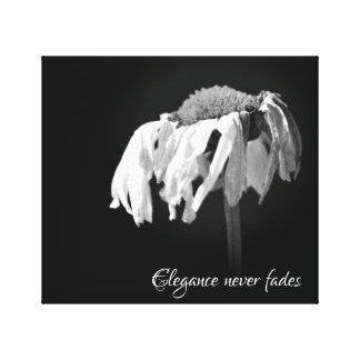 Daisy Elegance Canvas Print