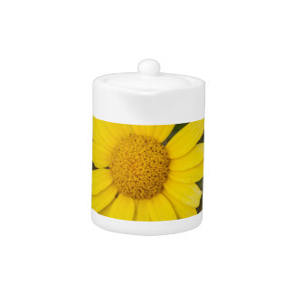 Daisy flower cu yellow