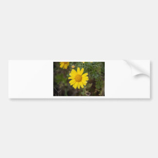 Daisy flower cu yellow bumper sticker