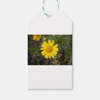 Daisy flower cu yellow gift tags