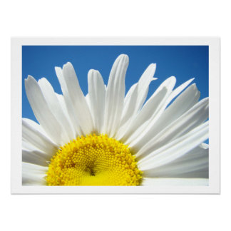 Daisy Flower Fine Art Print Blue Sky Floral