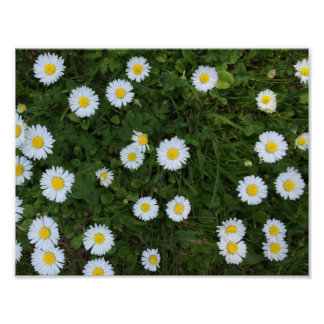 Daisy Flower Poster
