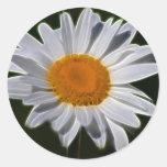 Daisy flower power round stickers