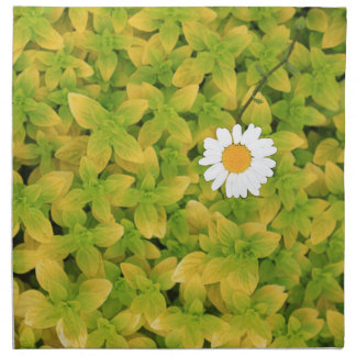 Daisy Flower Reaching For The Sun Cloth Napkins