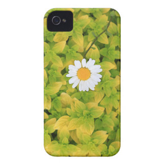 Daisy Flower Reaching For The Sun iPhone 4 Case-Mate Case