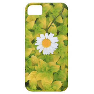 Daisy Flower Reaching For The Sun iPhone 5 Cases