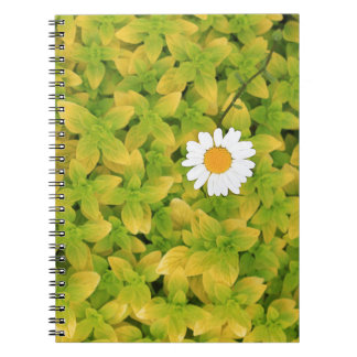 Daisy Flower Reaching For The Sun Notebooks