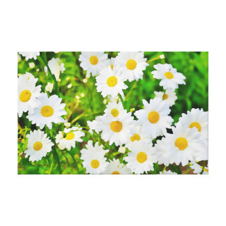 Daisy Flower Spring Marguerite Canvas Print