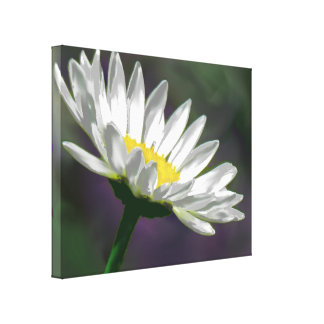 Daisy Flower Stretched Canvas Print