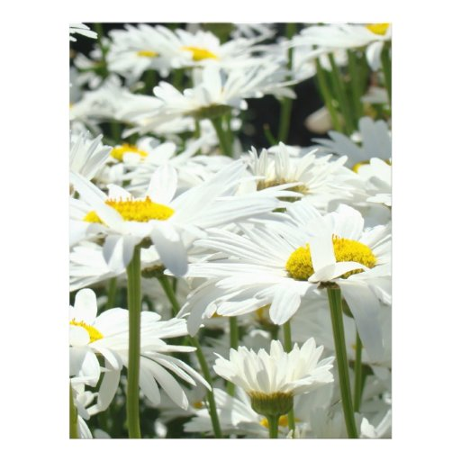 Daisy Flower themed Flyers paper Business Office