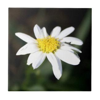 Daisy Flower Tile