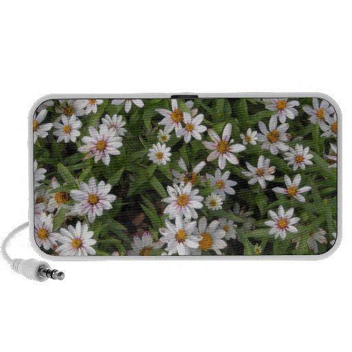 Daisy flower white wild flowers travelling speakers