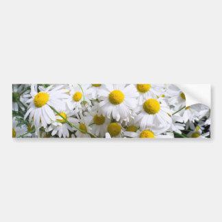 Daisy flowers bumper sticker