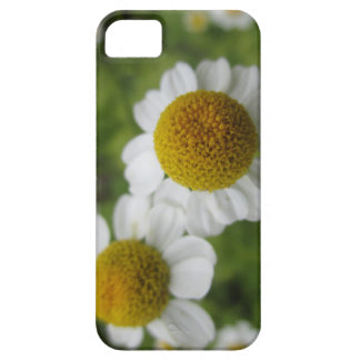 Daisy Flowers Case