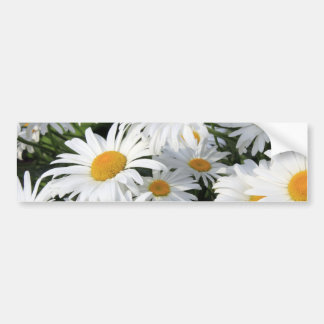 Daisy Flowers Growing White Bumper Sticker