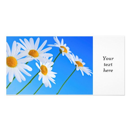 Daisy flowers on blue background personalized photo card