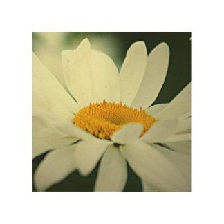 Daisy Flowers Wood Print