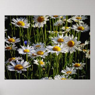 Daisy Forest Print