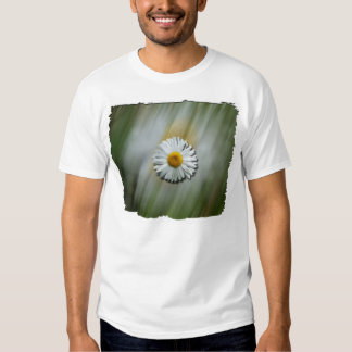Daisy in a Hurry Shirts
