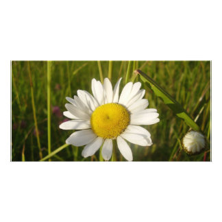 Daisy In The Field Personalized Photo Card