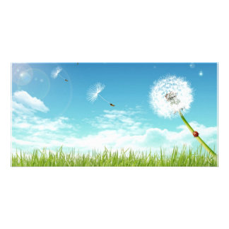 Daisy In The Field Photo Card Template