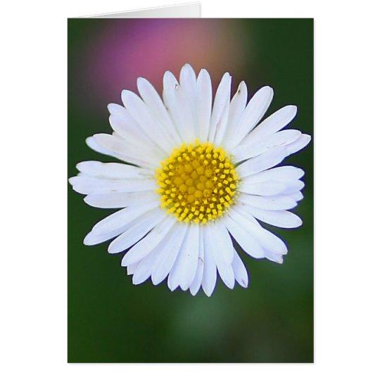 Daisy in the Garden Card