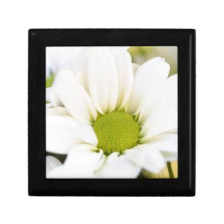 daisy in the garden gift box