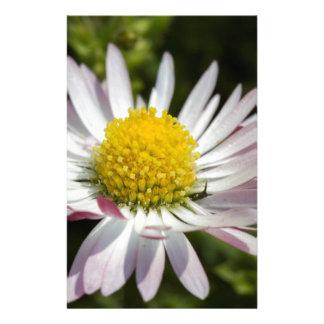 daisy in the garden stationery