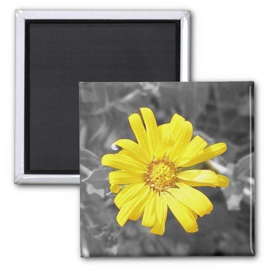 Daisy in Yellow, Black and White Square Magnet