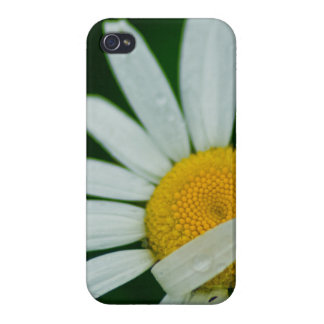 daisy iPhone 4/4S covers