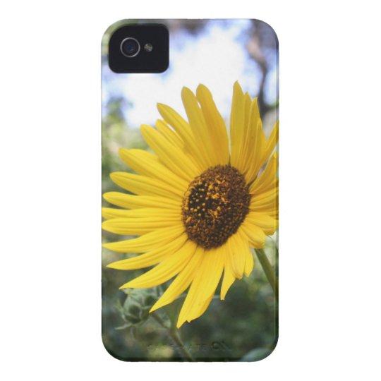 Daisy IPhone 4 Case