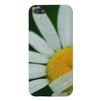 daisy iPhone 5/5S cover