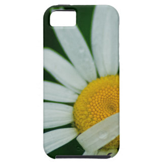 daisy iPhone 5 case