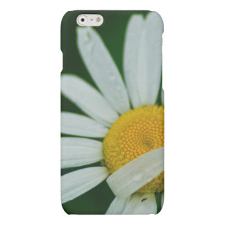 daisy iPhone 6 plus case