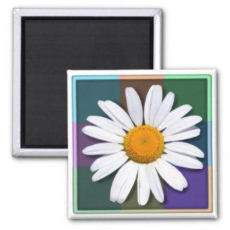 Daisy magnet
