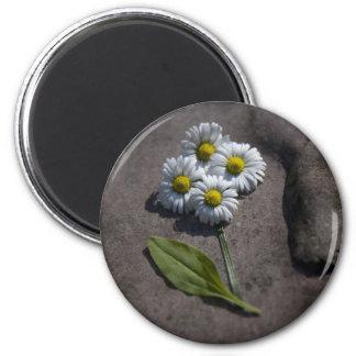 'Daisy' magnet