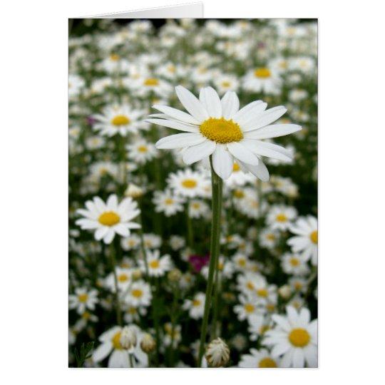 Daisy Meadow Card