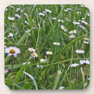 Daisy Meadow Coaster