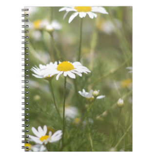 Daisy Notebooks