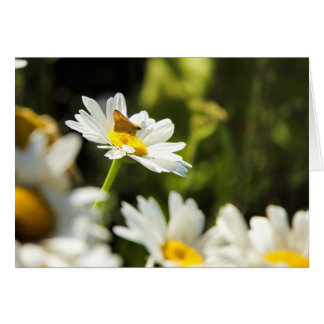 Daisy Photo Card