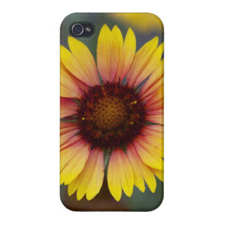 Daisy Photo Floral iPhone 4 Case