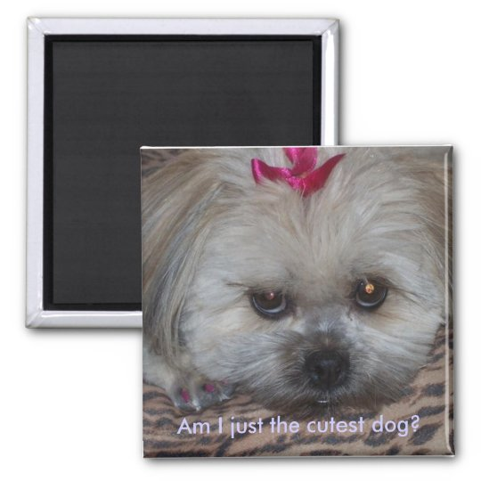 Daisy pic, Am I just the cutest dog? Square Magnet
