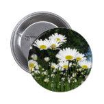 daisy pinback button