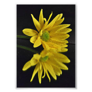 Daisy Reflection Photo Print