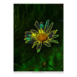 Daisy Shine by Rowan Blair Colver Posters