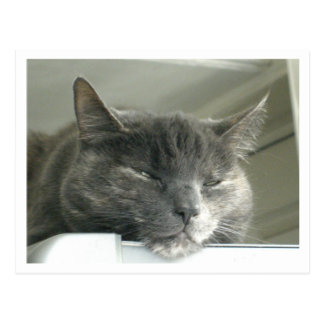 Daisy Sleeping Postcard