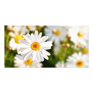 Daisy Spring Flowers Picture Card
