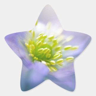 Daisy Star Sticker
