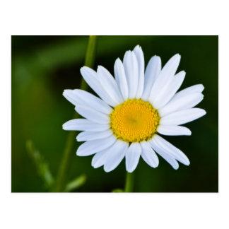 Daisy Stationary- So Cheery! Postcard