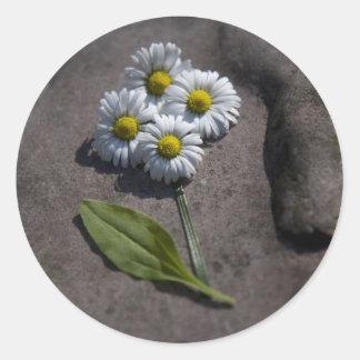 'Daisy' sticker